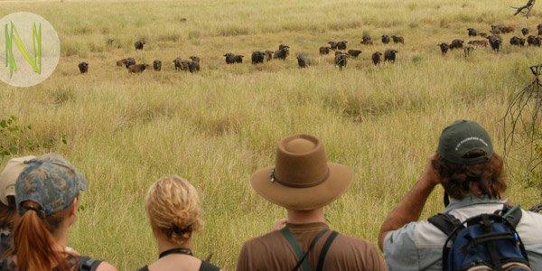 Professional Field Guide Kurs: Tiere beobachten