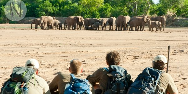 Field Guide Level 1 Kurs in Afrika